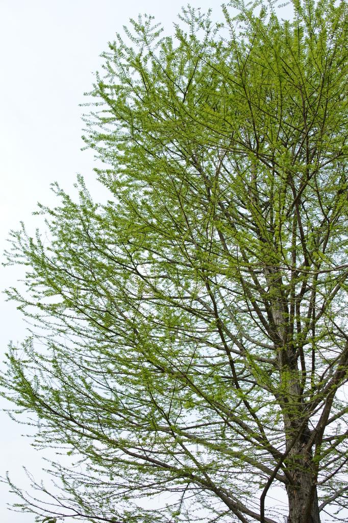木も新緑が