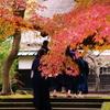 鎌倉プレ紅葉情報Ⅴ(ご参考)
