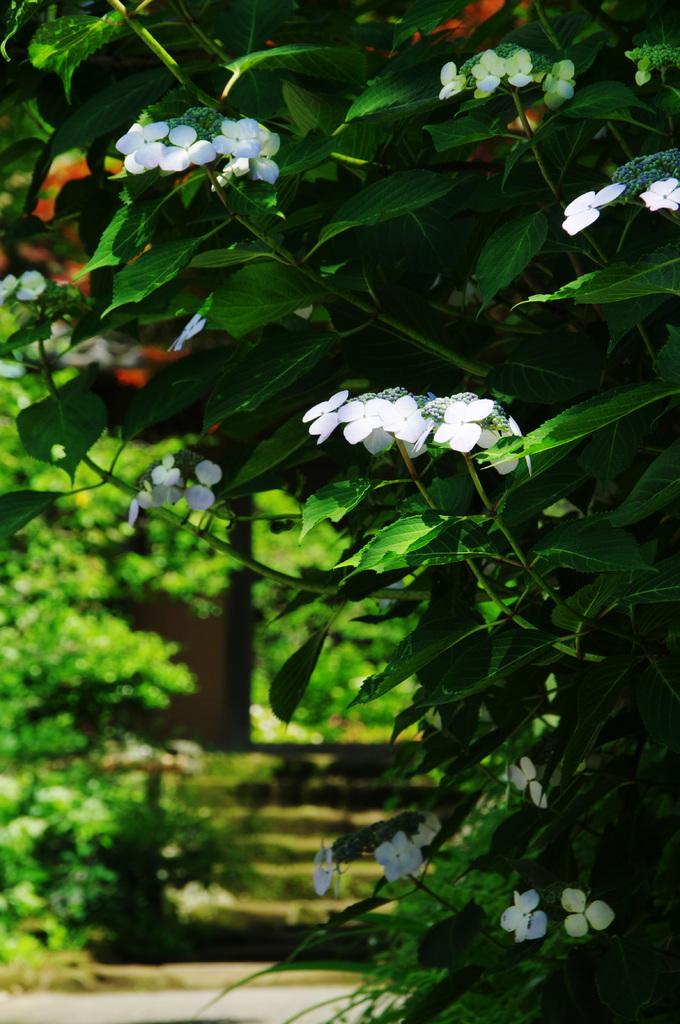 きれいだね 一寸寄ろうか 花の寺