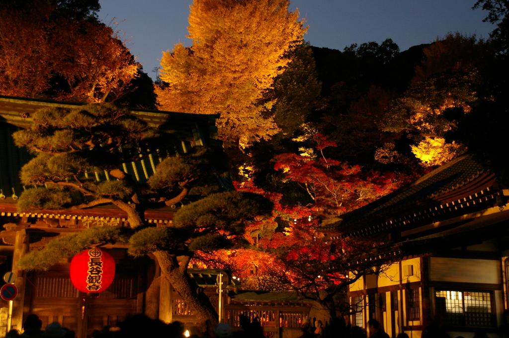 2006年秋紅葉長谷観音ライトアップ