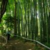 竹林の魅力