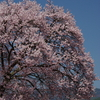 勝間薬師堂から高遠閣を望む(2007/4-7)