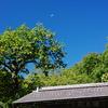 鎌倉秋色情報Ⅱ(浄智寺柿)