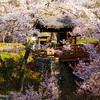 問屋門高遠(2007/4-Ⅳ)
