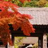 鎌倉紅葉情報Ⅲ(円覚寺舎利殿前)
