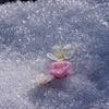 淡雪に咲く