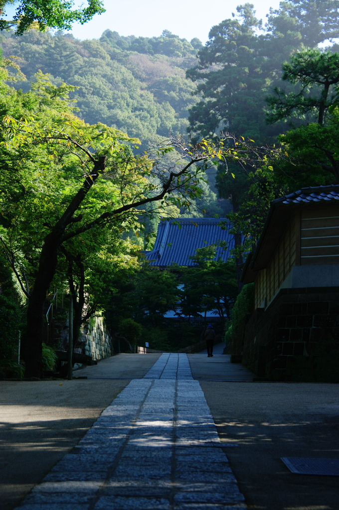 鎌倉秋色情報Ⅲ(円覚寺)