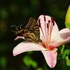 えっ。昆虫図鑑!?Ⅱ