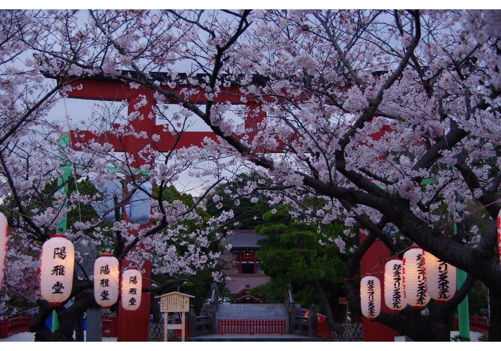 20080330鎌倉鶴岡八幡宮を見る