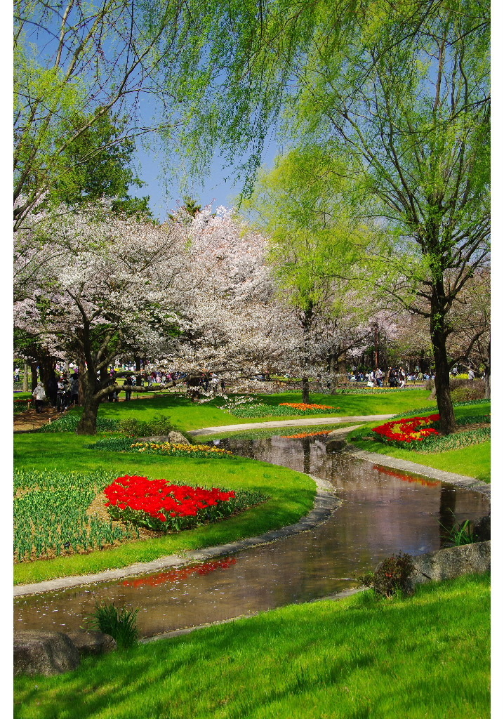 花も木も みんな春色 輝いて