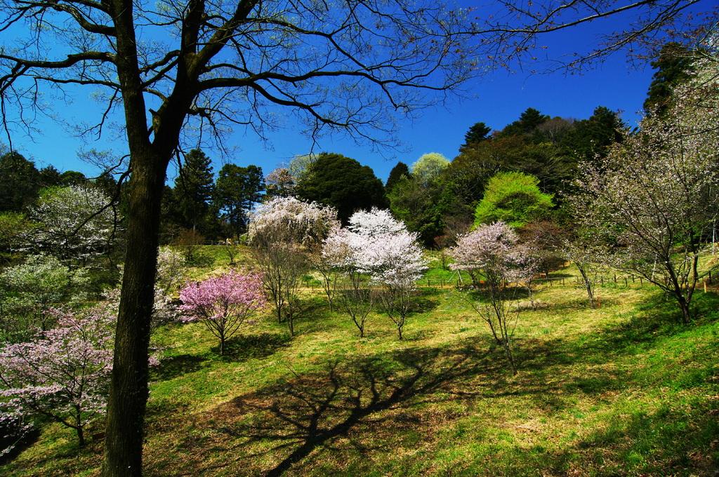 芽吹きと桜花と