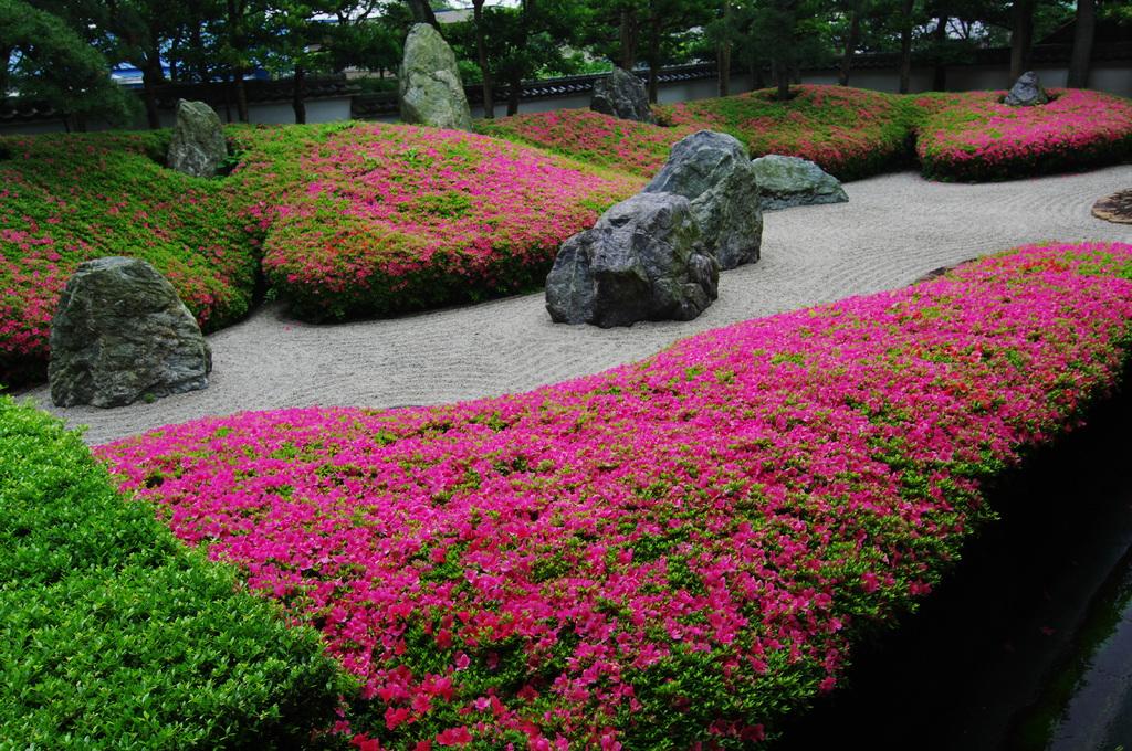 皐月萌え いつもと違う 古都の庭