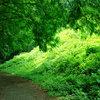 晩夏の緑?