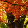 公園の秋Ⅱ