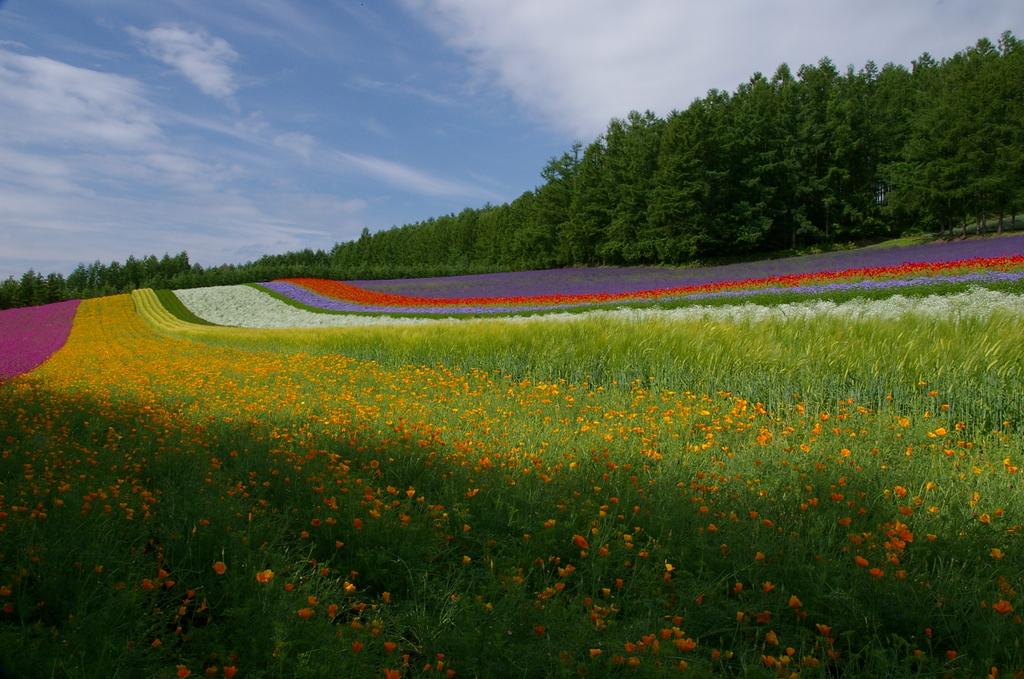 想い出の北海道2(2006/7)