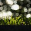 五稜郭 お堀の芝生