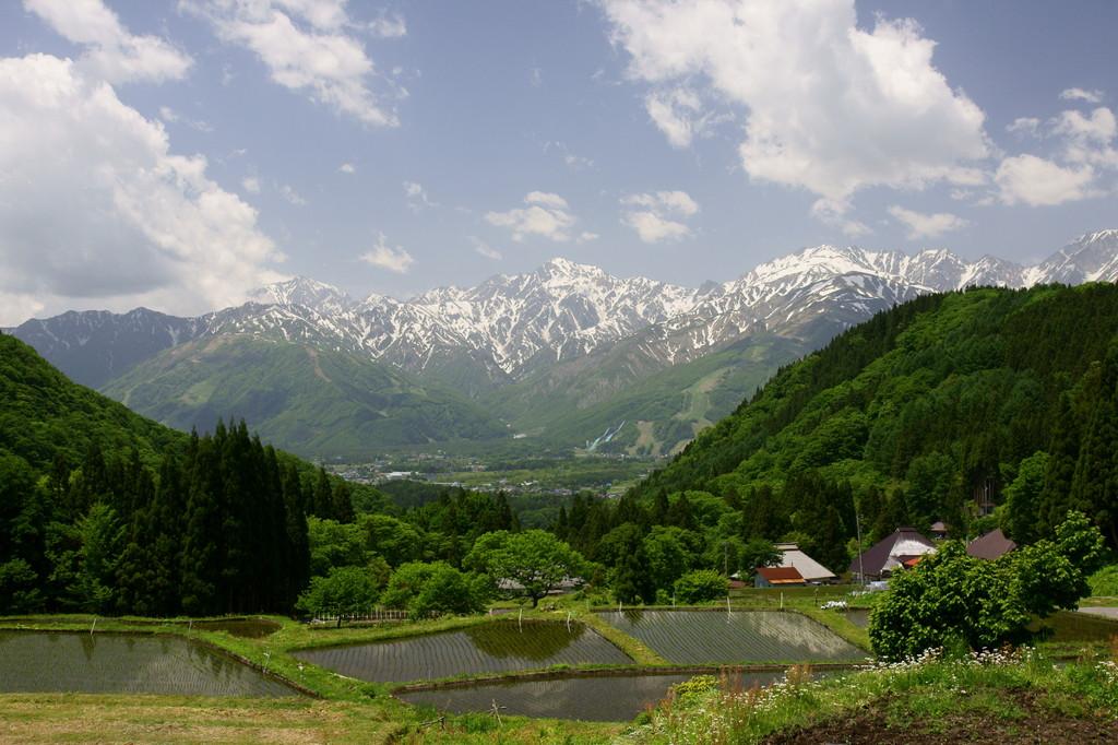 棚田と白馬の山々