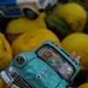 ウサビッチ只今逃走中 ~ 柚子の里に逃げ込む。