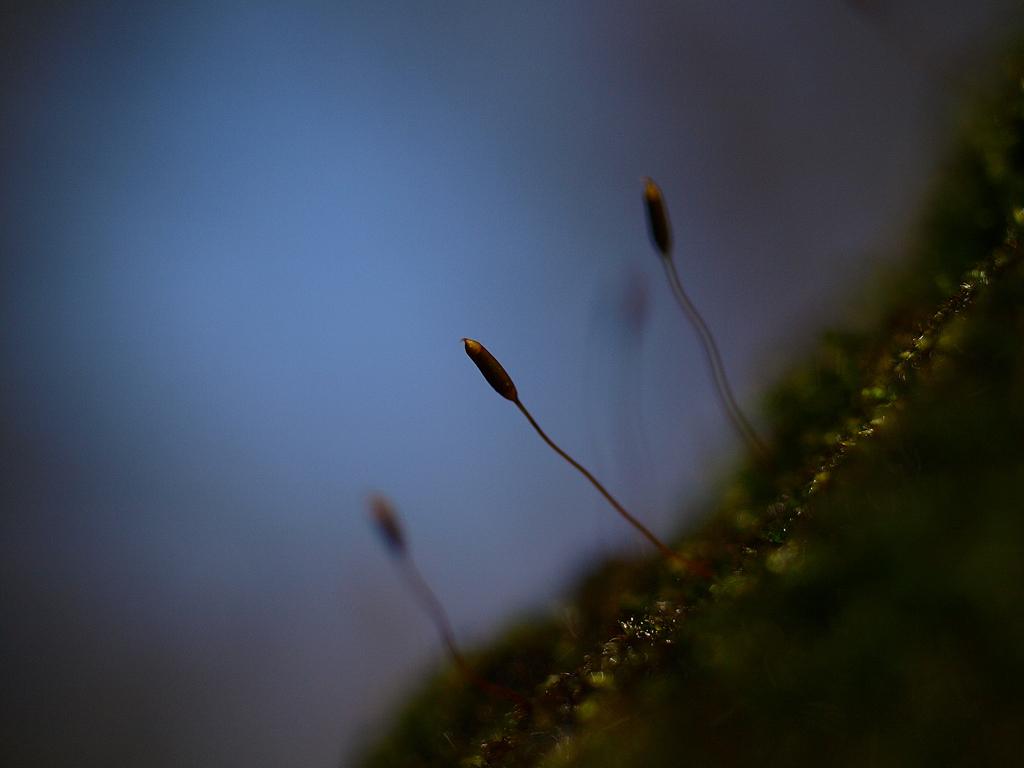 春を探すアンテナ