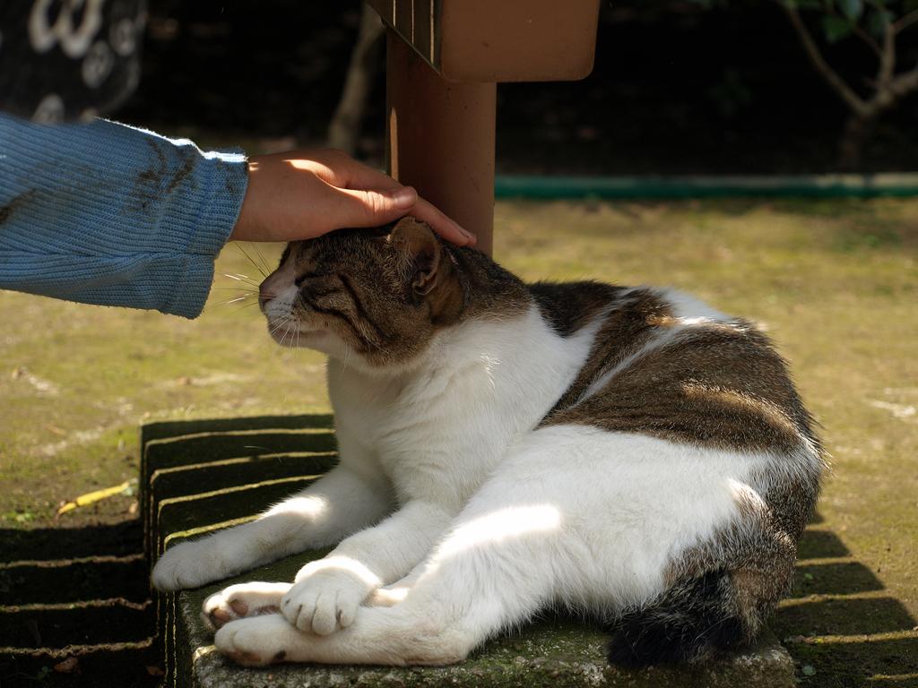 猫日和:至福の一時