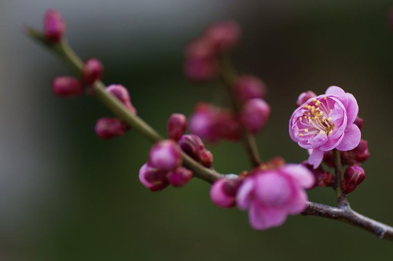春の香り #01