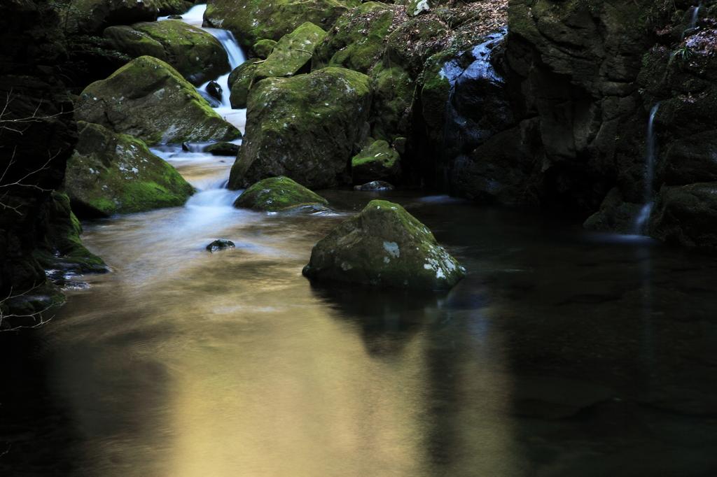 深緑の静寂