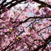 秘密の春園