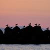 夕凪と海鳥