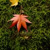 小さな秋と大きな秋
