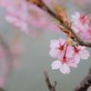 小さな春 その1