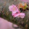 小さな春 その2