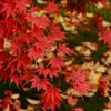 真っ赤な秋