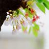 今年最後の小さな春
