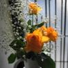 玄関前の薔薇