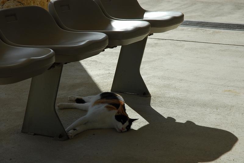 日陰でお昼寝
