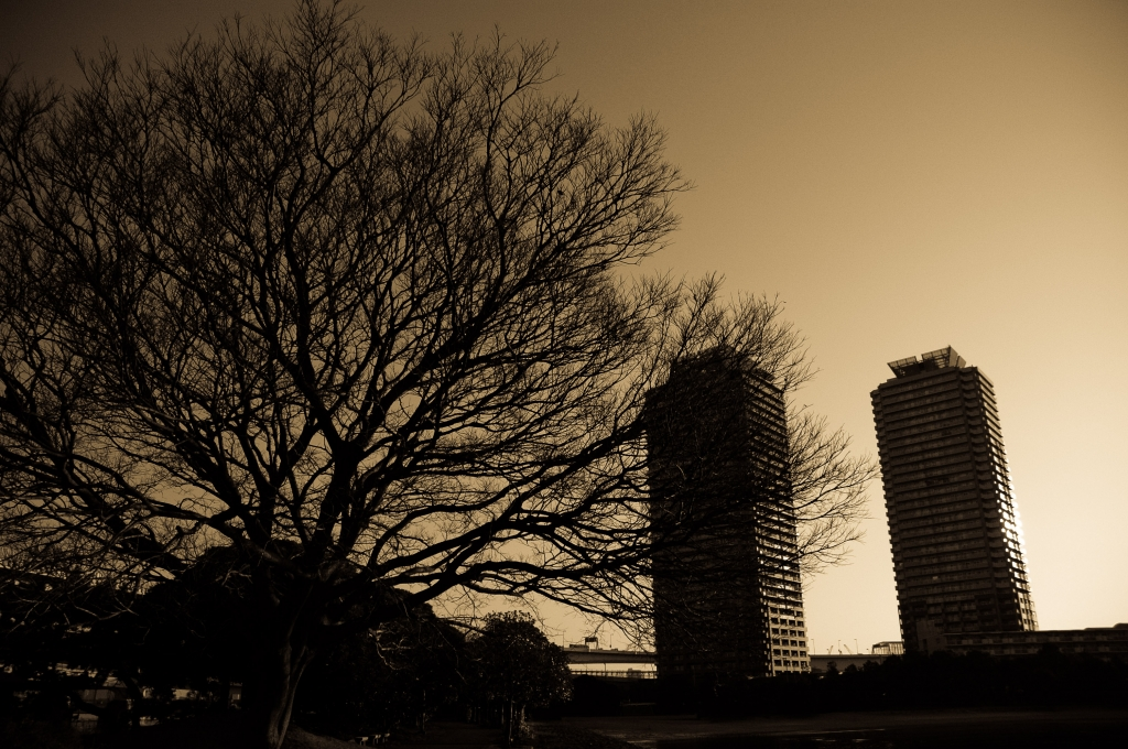 a tree and towers