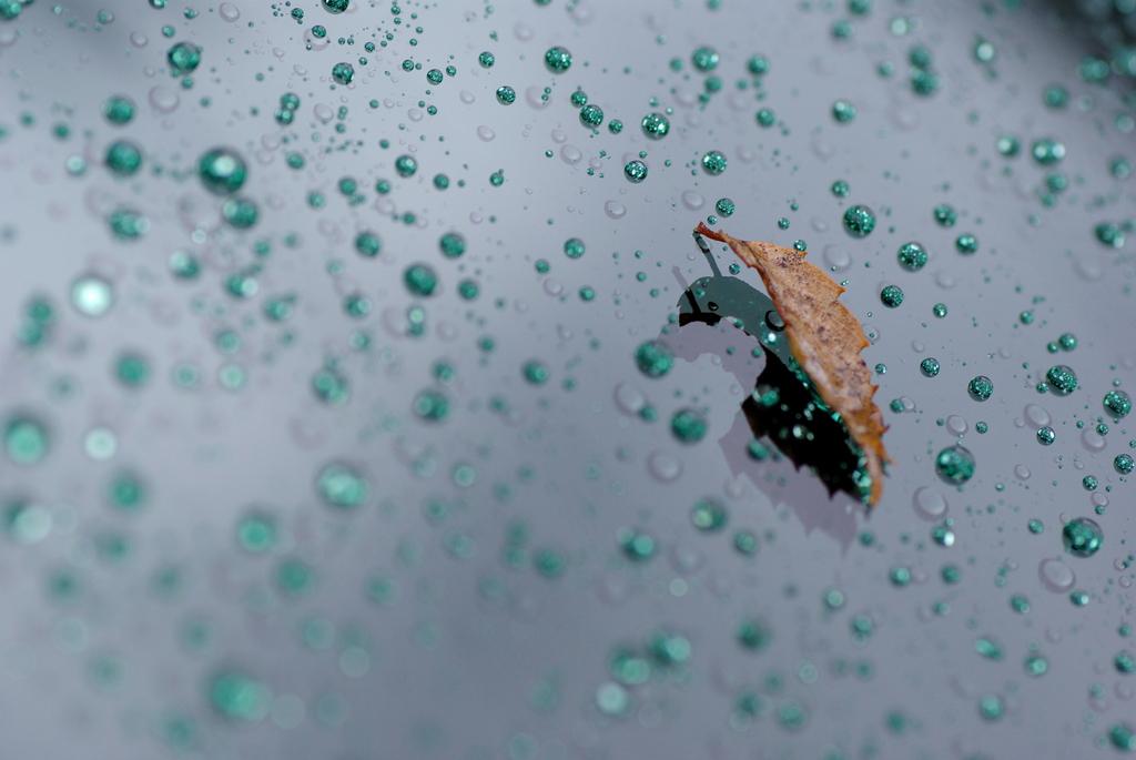 雨粒と落ち葉