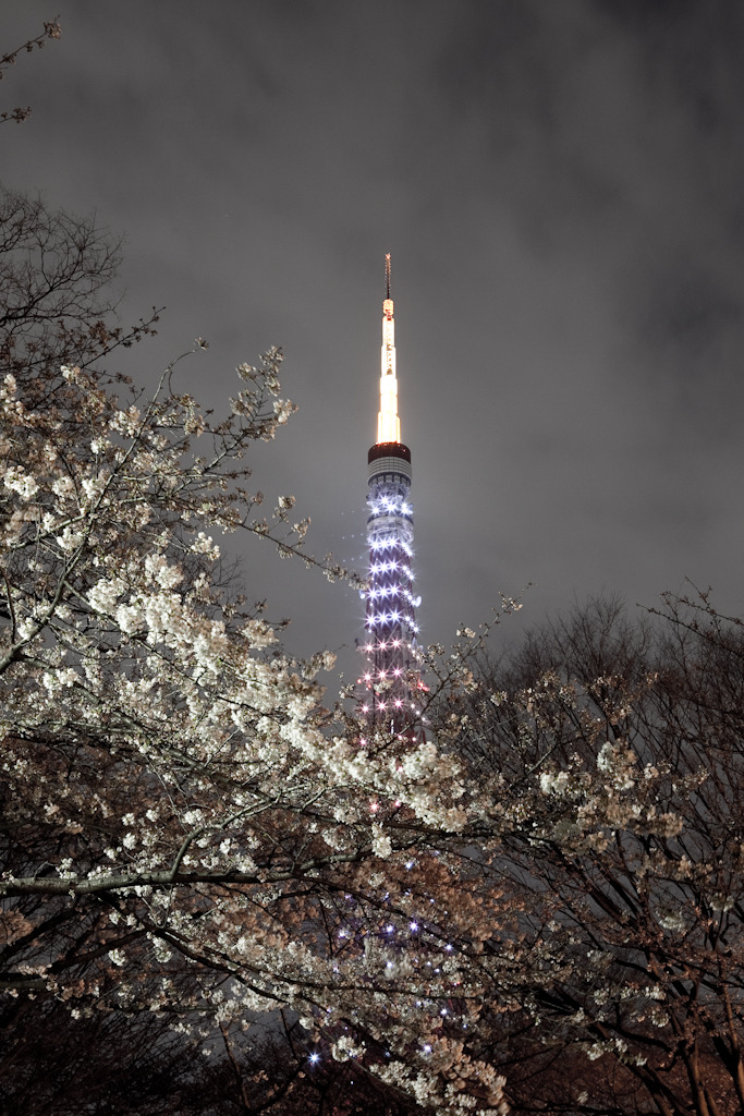 SAKURA TOWER