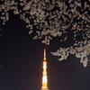 東京サクラー