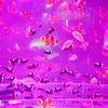 天空の魚たち pink
