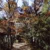 東京八王子「秋の高尾山」