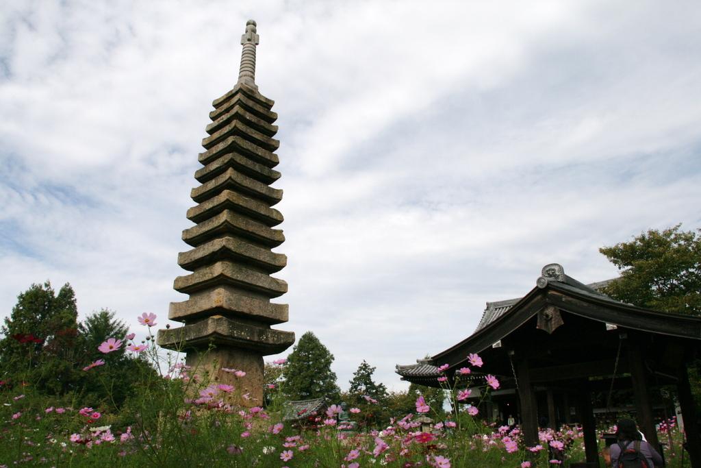 般若寺の13重の塔とコスモス