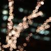 ランプツリー