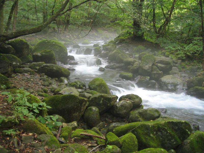 尚仁沢 2005