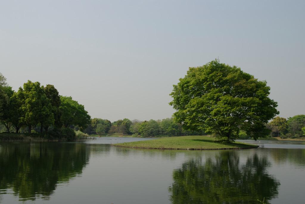 P0431昭和記念公園水鳥の池