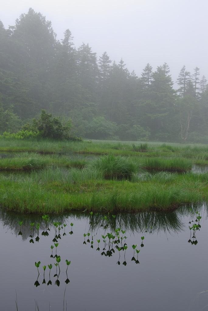 P4037尾瀬の池塘