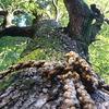 お守りの木