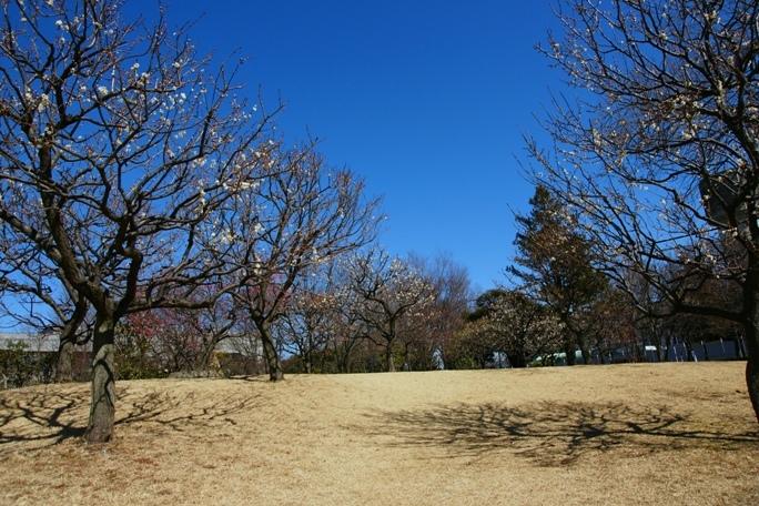 早春の公園