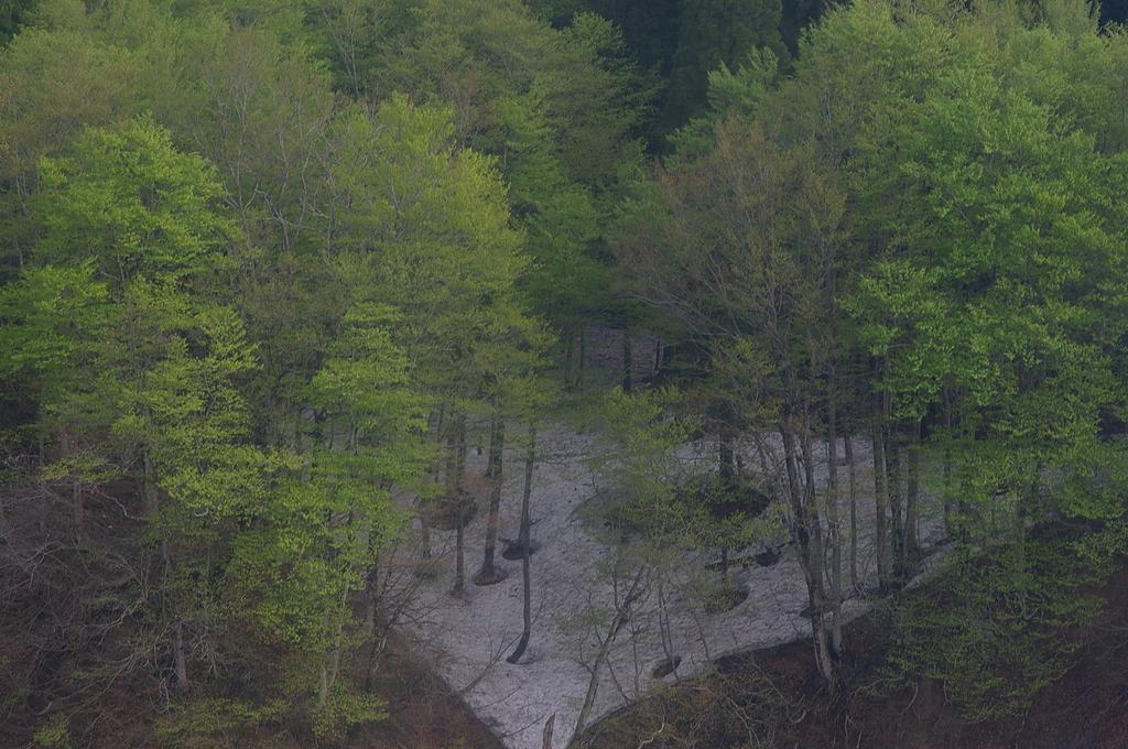 松之山の遅い春