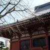 浅草寺(本堂裏から)